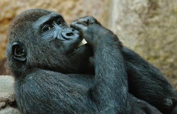 monkey-1346580_1280