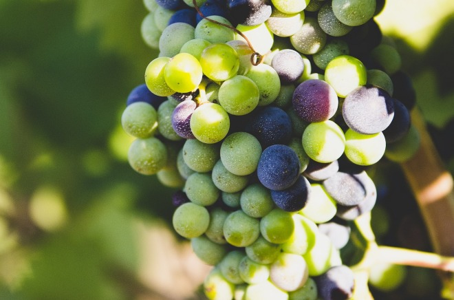 grapes-863703_1280
