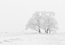 winter-20234_1920