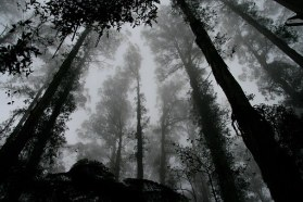 forest-1030832__340