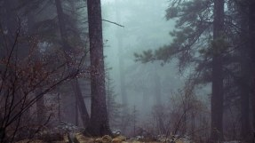 forest-801777__340