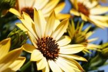 flower-108685__340