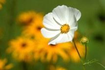 flower-180035__340