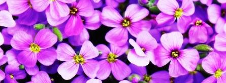 flowers-746083__340
