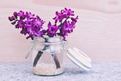 hyacinth-747157__340