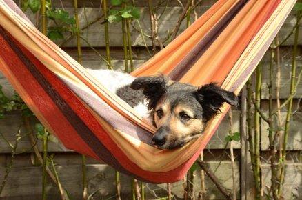 dog-1543634__340