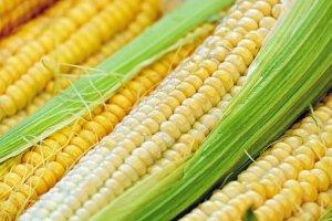 corn-1605664__340