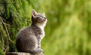 cat-2083492__340-2