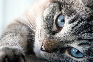 cat-3062647__340