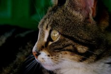 cat-3090088__340