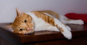 cat-3092648__340