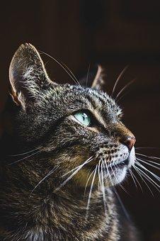 cat-3094971__340