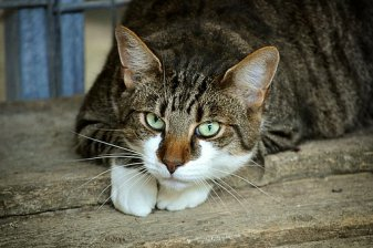 cats-eyes-2671903__340
