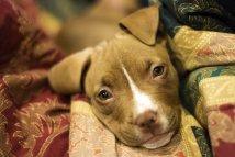 puppy-3091617__340