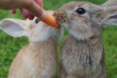 rabbit-2505034__340