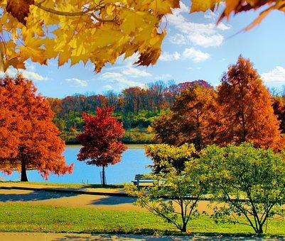 fall-3257990__340