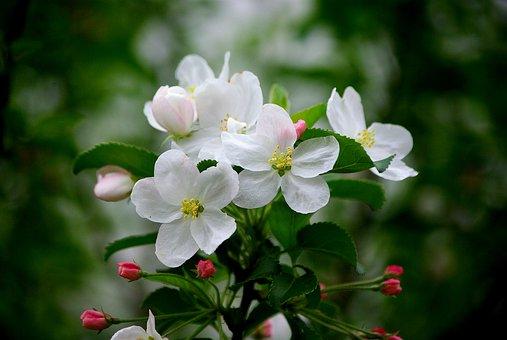 flowers-3248517__340