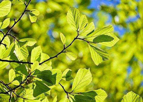 persian-oak-wood-3064187__340