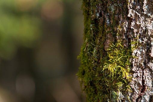 tree-3224610__340