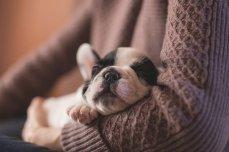 adorable-1850276__340