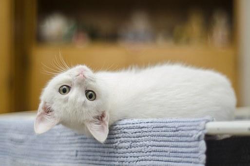 kitten-1285341__340