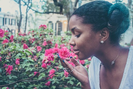 flower-731300__340